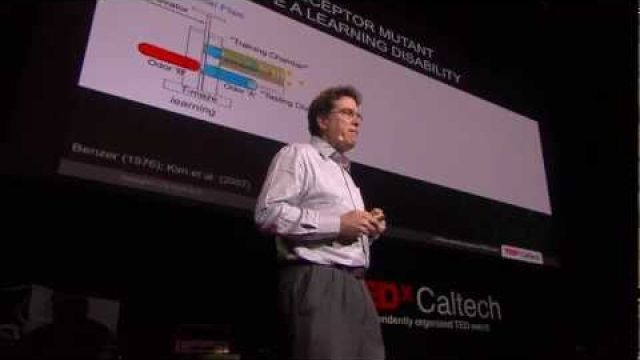 Drugs, dopamine and drosophila -- A fly model for ADHD? | David Anderson | TEDxCaltech